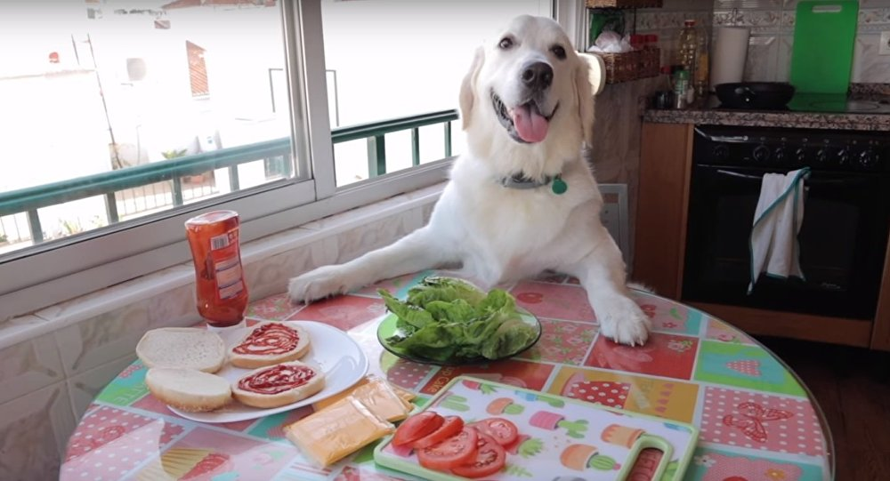 Dog Makes Hamburger
